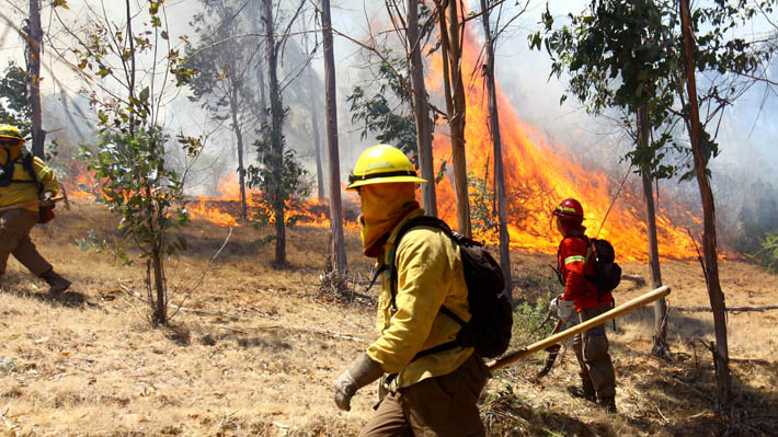Sequía agrava proyección de incendios forestales y superficie afectada aumentaría hasta 39%