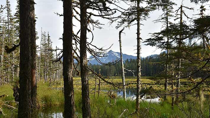 Medio estadounidense afirma que Trump quiere explotar un importante bosque protegido de Alaska