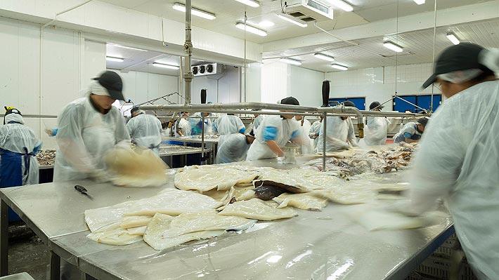 Ley de la Jibia: Pesquera Landes anuncia cierre definitivo de su planta en Talcahuano y despide a 232 trabajadores
