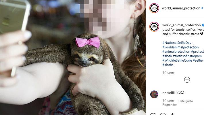 """Expertos en vida salvaje advierten sobre riesgos de la práctica de sacarse selfies con animales: """"Es aterrador"""""""