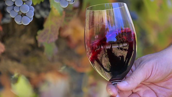 Día Nacional del Vino: conoce por qué se celebra y algunos de los beneficios que tiene este producto tradicional de Chile