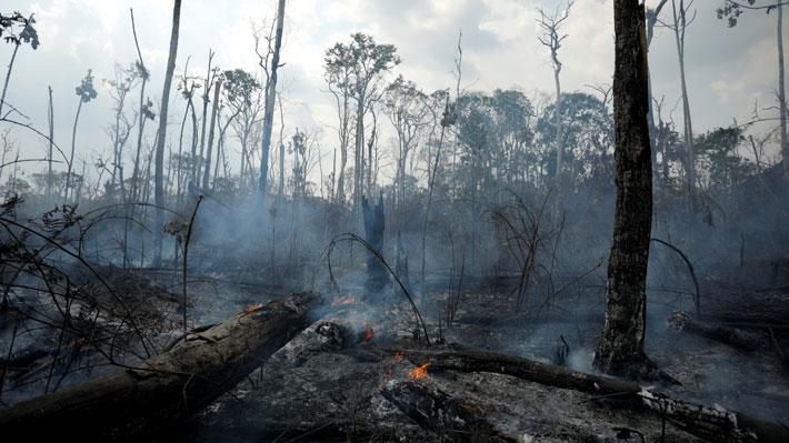 """Hacerla """"santuario de la humanidad"""" o darle derechos propios: Las propuestas de expertos para proteger la Amazonía"""