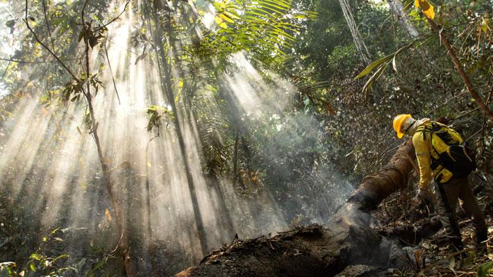 La deforestación en la Amazonía brasileña aumentó en agosto un 222% respecto al mismo mes del año pasado