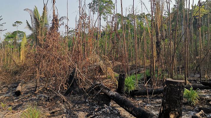En el corazón de la Amazonía: La deforestación y los incendios en el estado brasileño de Rondonia