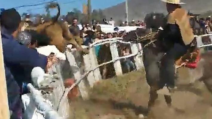 Novillo escapó de medialuna en medio de un rodeo y embistió a diez personas en la ciudad de Huasco