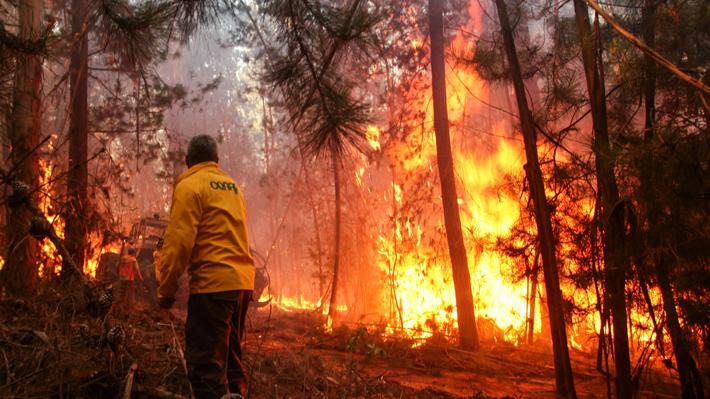 Brigadistas de la Conaf en la megasequía: Radiografía a quienes combatirán la dura temporada de incendios
