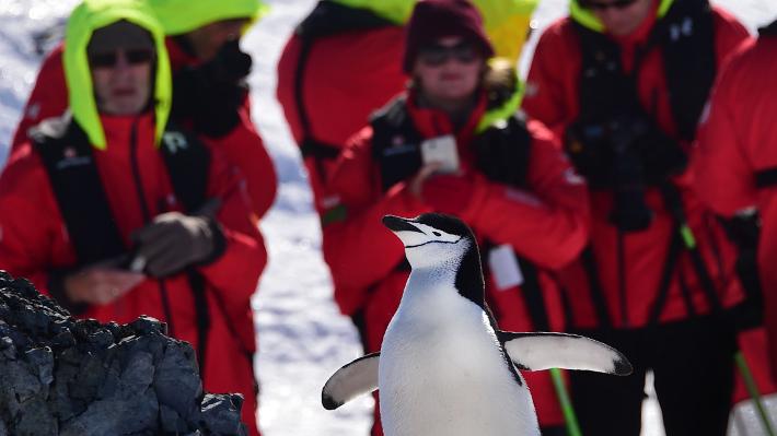 """Galería: La Antártica, el codiciado destino del """"turismo de última oportunidad"""""""