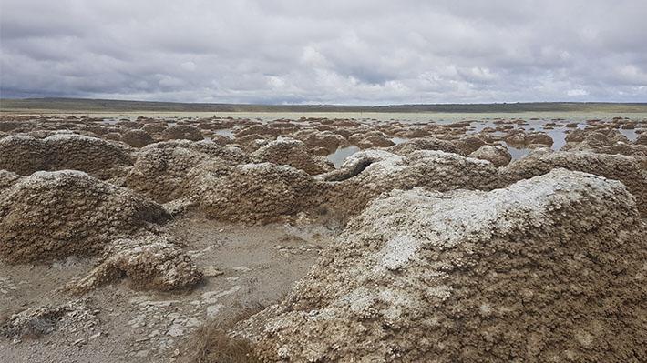 Científicos chilenos y mexicanos estudian los efectos del cambio climático en curiosas estructuras naturales de Magallanes