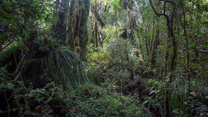 COP25 enfrenta su cuarta jornada con el foco puesto en la agricultura y los bosques