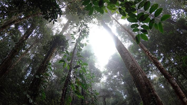Informe internacional reafirma la importancia de la naturaleza para frenar la crisis climática