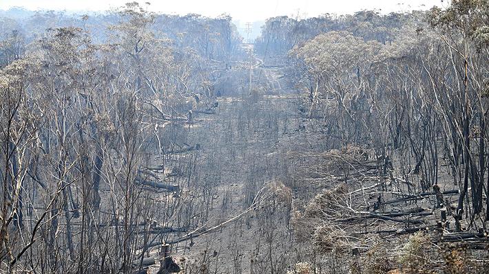 Australia declara estado de emergencia por grandes incendios forestales que afectan al sudeste del país