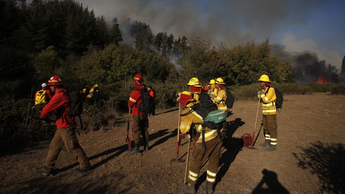 Balance de incendios forestales según Conaf: Tres se encuentran activos y 17 controlados