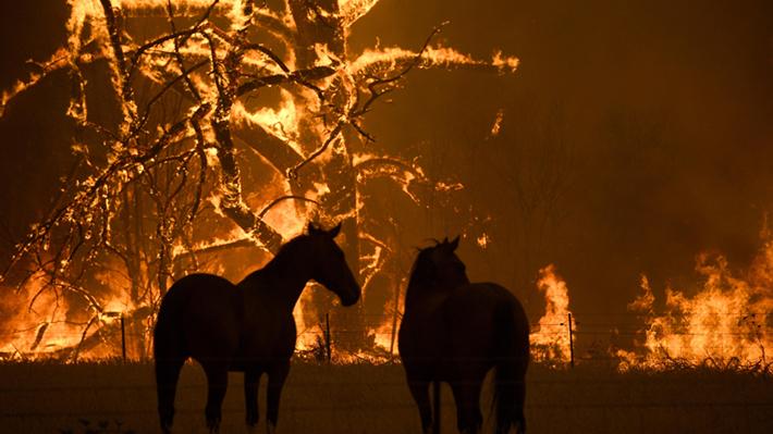 Galería: Las impactantes imágenes que han dejado los devastadores incendios en Australia