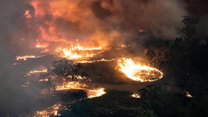 """""""Era como una película de ciencia ficción"""": Australianos relatan su experiencia enfrentando los incendios"""