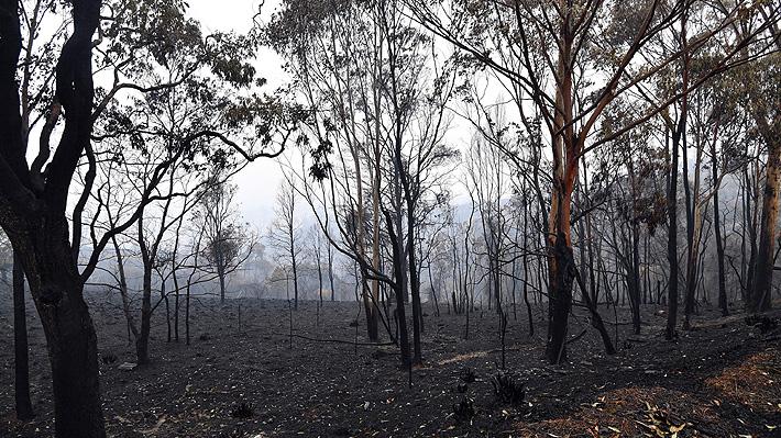 """Fotógrafo australiano reveló detalles de imagen """"devastadora"""" de un canguro calcinado en los incendios forestales"""