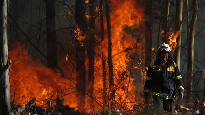 Onemi informa que los incendios de la Región del Biobío han consumido más de mil hectáreas