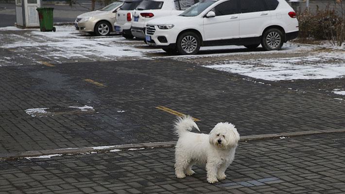 Animales abandonados o atrapados en hogares: Mascotas también ...