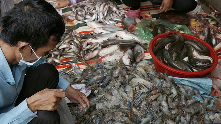 Murciélagos, ratas y pangolines: Piden veto definitivo a consumo de animales salvajes en China tras brote de coronavirus