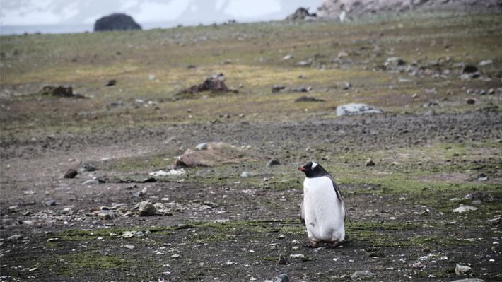 """Director del Instituto Antártico Chileno y temperatura récord en la zona: """"Este año ha sido uno de los más dramáticos"""""""