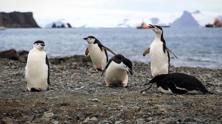 Sigue batiendo récords: Termómetro de la Antártica sobrepasa los 20°C