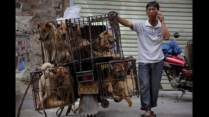 Gobierno chino excluye a perros y gatos de lista de animales que se pueden consumir como alimento