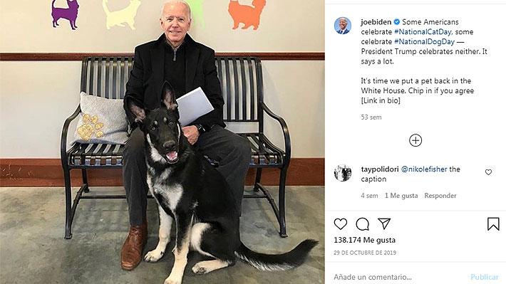 Champ y Major, los perros de Joe Biden que restablecerán la tradición de  las mascotas presidenciales en la Casa Blanca | Emol.com