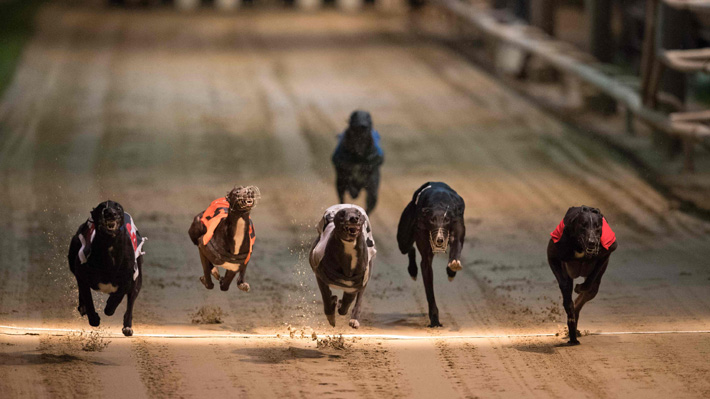 No más apuestas con perros: Londres dice adiós a las carreras de galgos